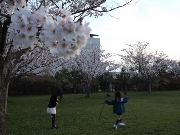 201604_hamamatsu_park_ohiradai (2)