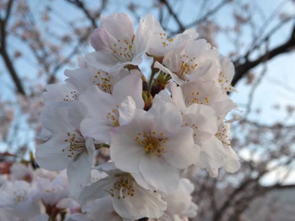 201604_hamamatsu_park_ohiradai (3)