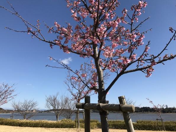 hamamatsushi_konkatsu_walking2