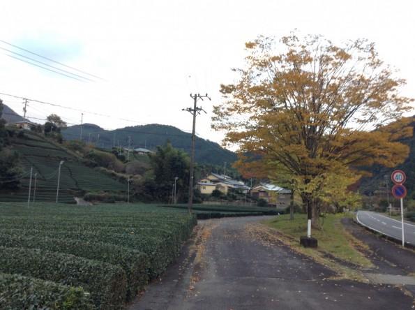 kawanehonmachi_konkatsu