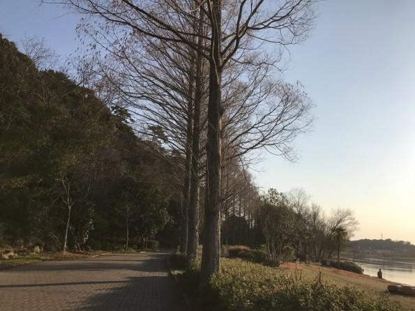 hamamatsushi_cycling2