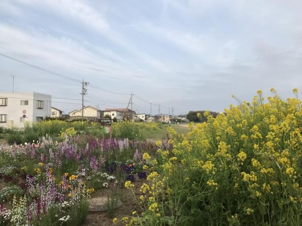 hamamatsushi_konkatsu_sanaruko5