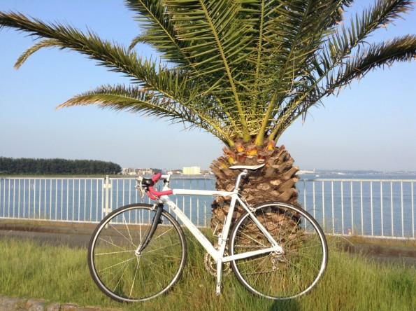 hamamatsu_hamanako_cycling (1)