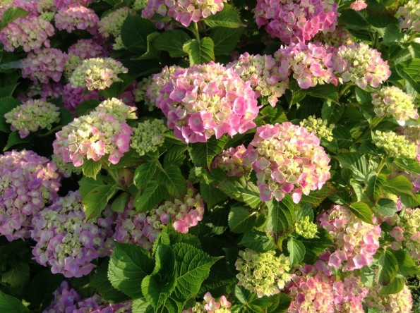 hamamatsu_rainseason_flower (4)