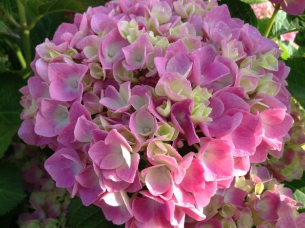 hamamatsu_rainseason_flower (5)