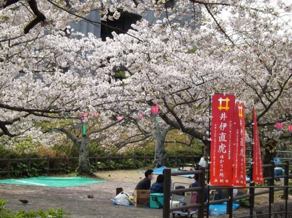 hamamatsu_spring_cherryblossom (52)