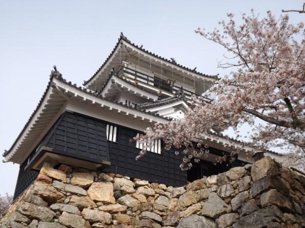 hamamatsu_spring_cherryblossom (56)