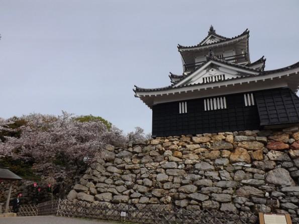 hamamatsu_spring_cherryblossom (61)
