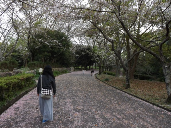 hamamatsu_spring_cherryblossom (92)