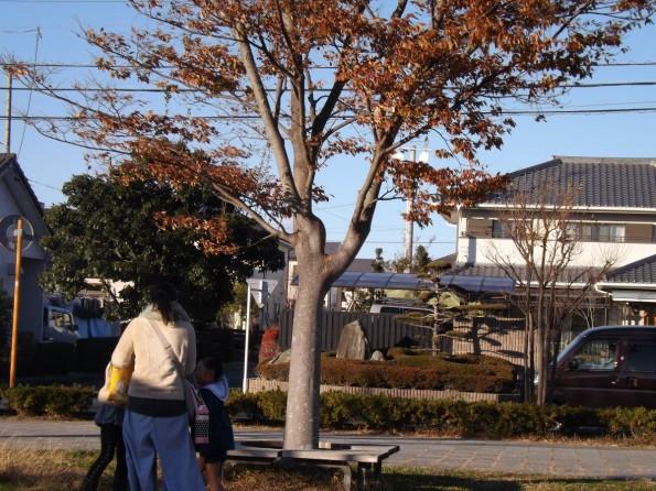 hamamatsushi_park-1