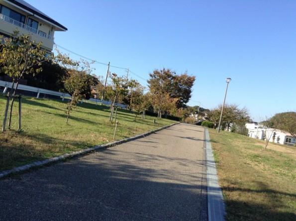 hamamatsushi_sanarulake_walking-15