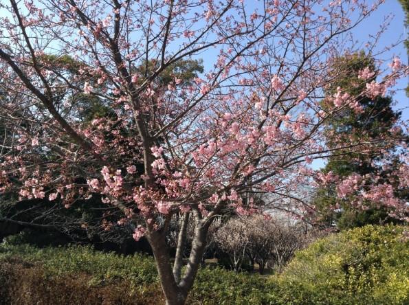 kikugawacity_daikanyashiki (5)