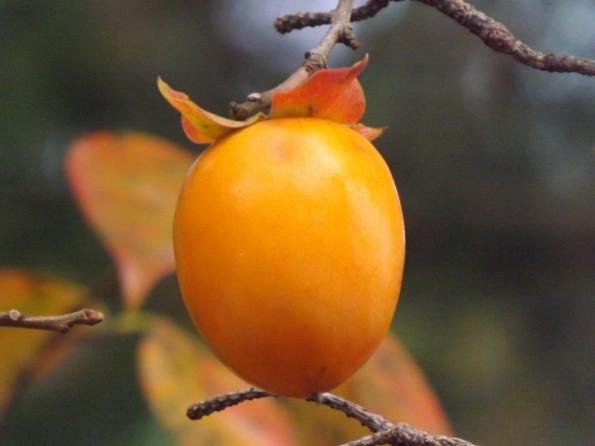 konkatsu_autumn-2