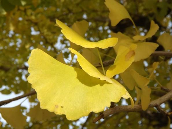 konkatsu_autumn-3