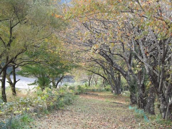 konkatsu_autumn-4