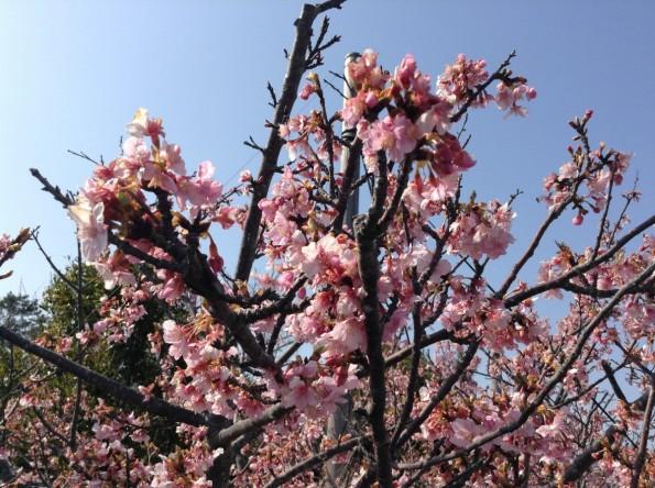 omaezakicity_sakyu (15)